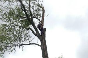 Photo #2: Experienced tree care and removal