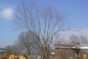 Photo #1: Experienced tree care and removal