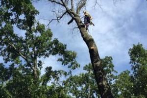 Photo #1: Tri-State Tree Service LLC
