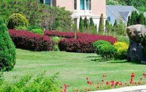 Photo #2: Fuente, lawn service