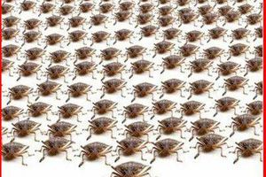 Photo #1: !Let us worry about bedbugs, we warranty our work!