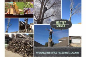 Photo #1: MG Tree Services. EXPERTS ON TREE REMOVAL