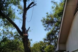 Photo #3: Najera Tree Service. Super cheap prices!