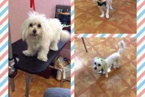 Photo #5: SHAGGY'S SPA :) dog grooming