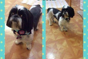Photo #3: SHAGGY'S SPA :) dog grooming