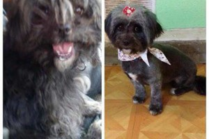 Photo #2: SHAGGY'S SPA :) dog grooming