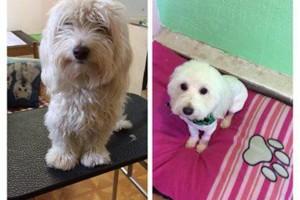 Photo #1: SHAGGY'S SPA :) dog grooming