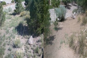 Photo #12: YARD CLEANING AND MAINTENANCE $20 HOUR