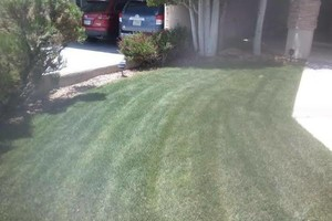Photo #11: YARD CLEANING AND MAINTENANCE $20 HOUR