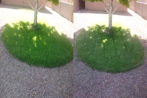 Photo #7: YARD CLEANING AND MAINTENANCE $20 HOUR