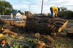 Photo #3: Happy Tree Service. Professional Tree Removals