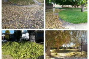 Photo #5: Yard clean up - $35 and up