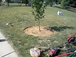 Photo #5: Yard work - clean yard trash/ cutting grass