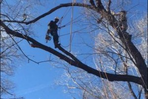 Photo #6: Tree Trimming & Removal, Rigging