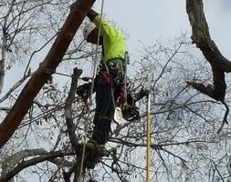 Photo #5: Tree Trimming & Removal, Rigging