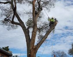 Photo #4: Tree Trimming & Removal, Rigging
