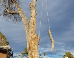 Photo #2: Tree Trimming & Removal, Rigging