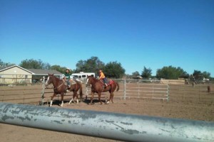 Photo #1: Horse Party for all ages