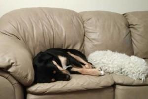 Photo #2: SHEILA'S DOG BOARDING-$20 night