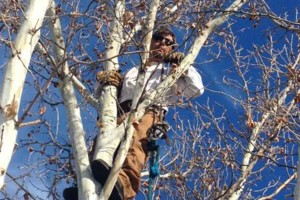 Photo #1: Miller Tree Trimming and Lawn Care