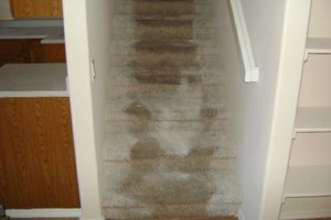 Photo #10: Carpet Installer Lannie. 20yrs exp!