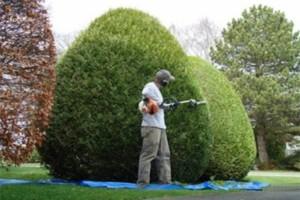 Photo #3: Yard Worker Robert Gurule. SUPER CHEAP!