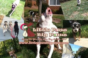 Photo #2: Dog Walking, On-Call Dog Walking & Potty Break for Your Furry Baby!