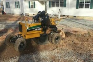 Photo #5: Alpha Tree Service. Stump Grinding