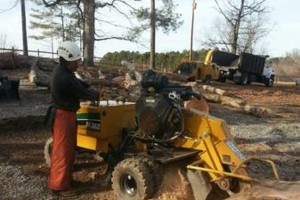Photo #4: Alpha Tree Service. Stump Grinding