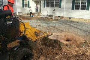 Photo #2: Alpha Tree Service. Stump Grinding