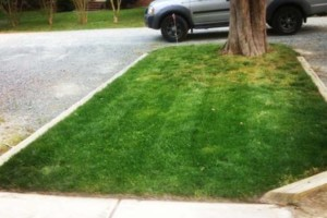 Photo #11: LAWN SERVICES - BLOWING, MULCH, LEAF BLOWING