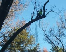 Photo #6: TREE WORK. FREE ESTIMATES!