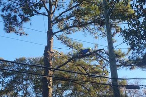 Photo #5: TREE WORK. FREE ESTIMATES!