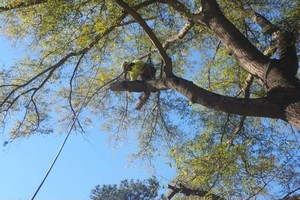 Photo #4: TREE WORK. FREE ESTIMATES!
