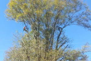 Photo #3: TREE WORK. FREE ESTIMATES!