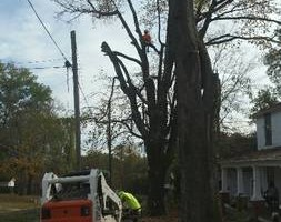 Photo #2: TREE WORK. FREE ESTIMATES!