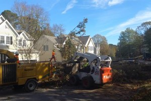 Photo #1: TREE WORK. FREE ESTIMATES!
