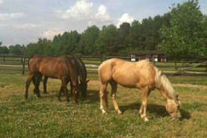 Photo #3: Oak Haven Acres Horse Retirement