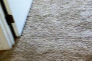Photo #1: Mike's Carpet Repair. Carpet Stretching/Creaking Floor Repair
