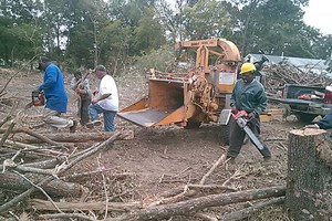 Photo #3: D & M LOGGING AND TREE SERVICE. Special on Stump Grinding 20% DISCOUNT!