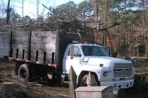 Photo #2: D & M LOGGING AND TREE SERVICE. Special on Stump Grinding 20% DISCOUNT!