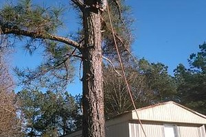 Photo #1: D & M LOGGING AND TREE SERVICE. Special on Stump Grinding 20% DISCOUNT!