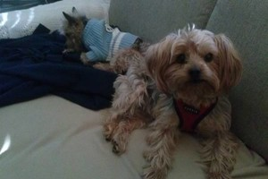 Photo #1: Experienced Loving Cat and Dog Sitter- Pet sitting and dog walking