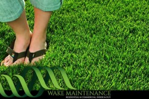 Photo #1: Wake Maintenance. Patchy grass? Get professional seeding at an affordable price.