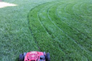 Photo #1: Nelson's LAWN MAINTENANCE