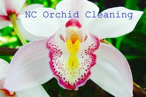 Photo #1: NC Orchid Cleaning