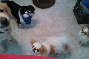 Photo #22: PET SITTER = ^. .^= I PET SIT 4 U!