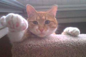 Photo #16: PET SITTER = ^. .^= I PET SIT 4 U!