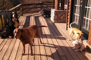 Photo #14: PET SITTER = ^. .^= I PET SIT 4 U!