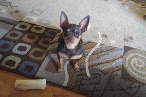 Photo #13: PET SITTER = ^. .^= I PET SIT 4 U!